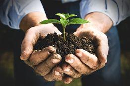 Tree Stump Grinding - Soil Management