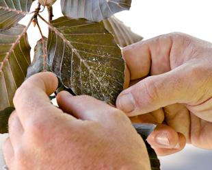 Tree Stump Grinding - Disease Management