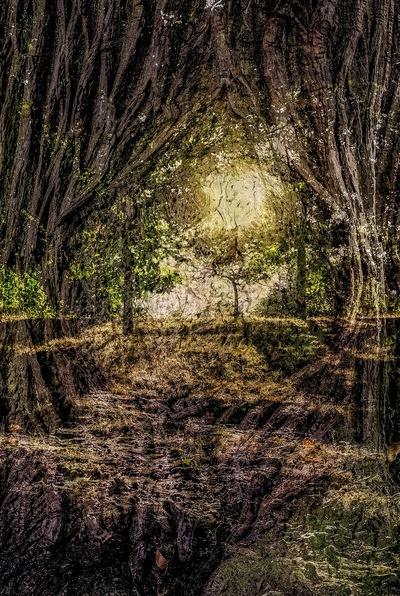 olivia pino photography -