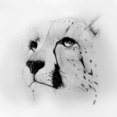 BY V - Illustration - The cat