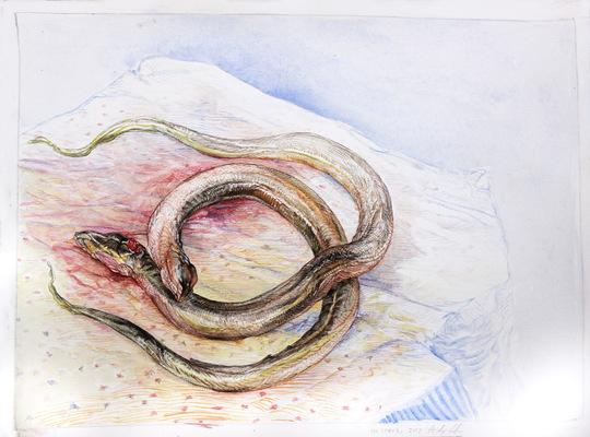 Alex Confer - Eels, 2017